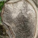 Небостъргачи от дърво - блян или близка реалност?